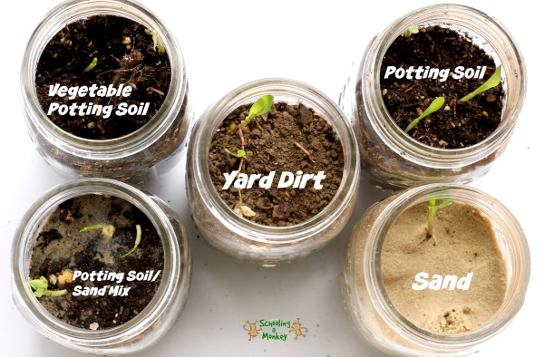 seed-sprouting-science-experiment-1