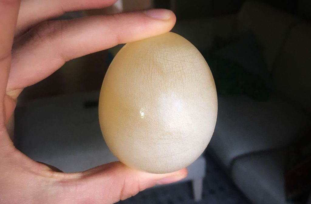 Rubber Egg Science Experiment and Explanation