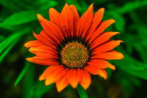 flower science experiment